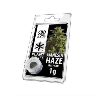 CBD-Jelly-Amnesia-Haze-Plant-of-life-1